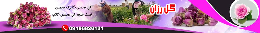 فروش گل محمدی